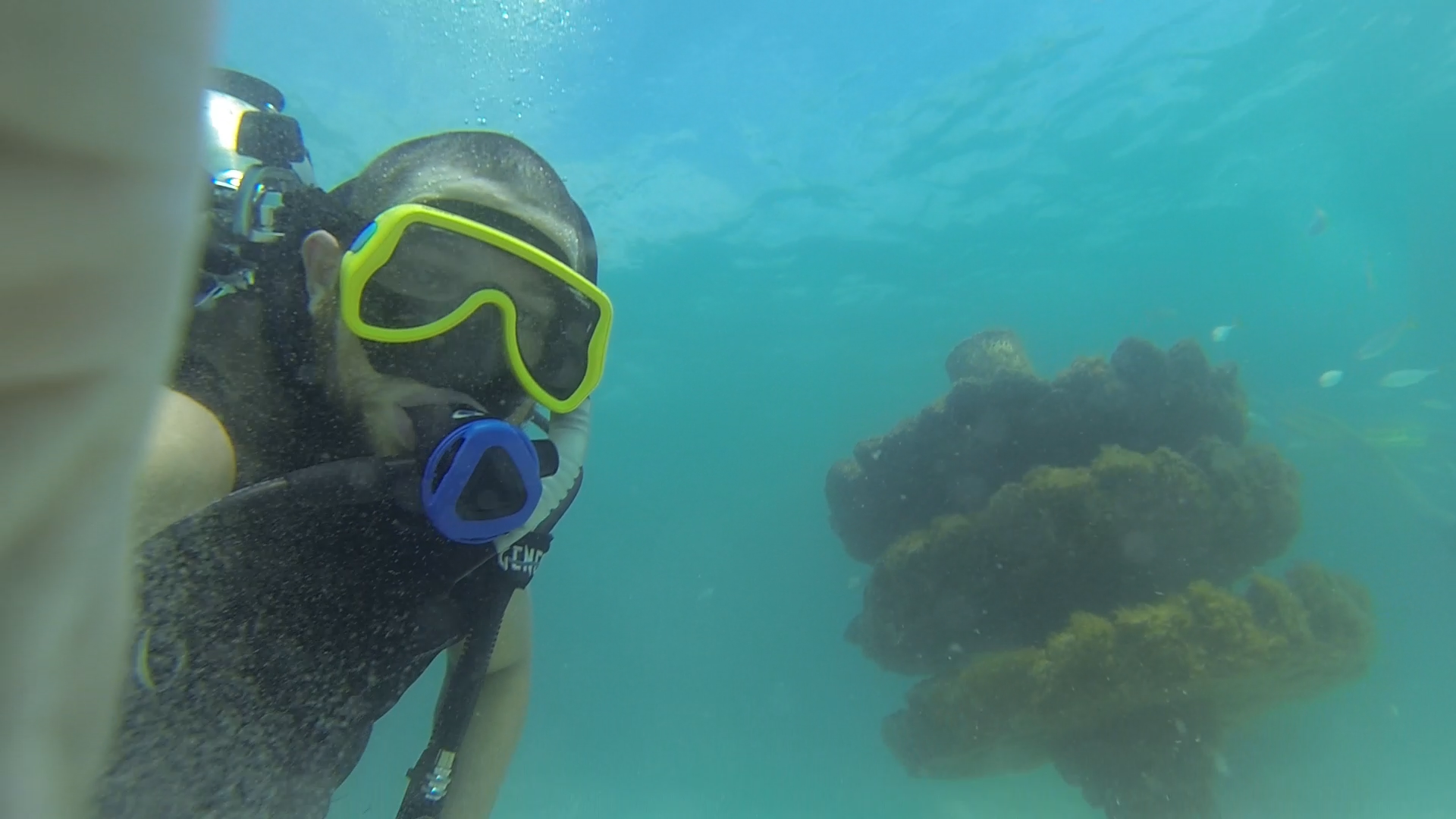 Dive into the New South Walton Artificial Reef!